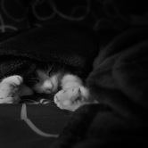Sleepy Murry - © Karissa Cole